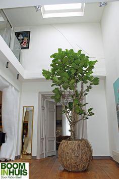 Portfolio - Bomen, Plantenbakken & kamerplanten online kopen