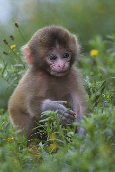 Awaji Monkey Center babies in the grassland.