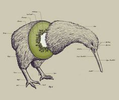 Don't get me wrong. .some of my favourite people are kiwis..