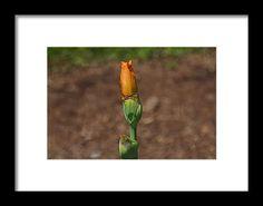 iris, bud, yellow, flower, nature, bloom, interior design, michiale, schneider, photography