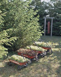 wagon gardens