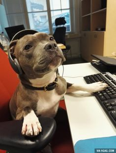 Hello? Yes, this is dog