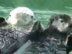 Otters Holding Hands :) Cute :)   Dizzy Spinners- keep your hands busy and your mind clear.  http://www.dizzyspinners.ontrapages.com/