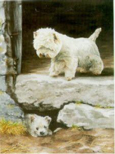 West Highland White Terrier Art Prints: Paul Doyle Mick Cawston