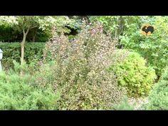 Сад делового человека. Ландшафтные хитрости 90 - YouTube