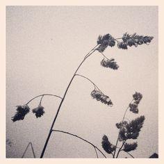 Grass silhouette.  Copyright Mash Media UK Ltd.