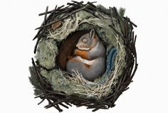 Eläimillä on keinonsa selvitä Pohjolan talvioloista. Osa rakentaa pesän ja kotiutuu, toiset viettävät kulkurin elämää ja saalistavat. Mitä orava on keksinyt pakkasten varalle?