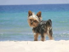 Are you ready for the beach ? #summer #dog #beach