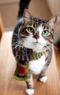 winter cat..