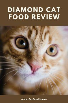 Bacillus Subtilis, Corn Gluten Meal, Beet Pulp, Vitamin D Supplement, Dessert Cookbooks, Bad Food, Chicken Flavors, Healthy Alternatives