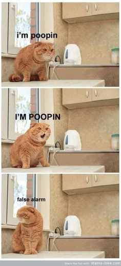#funny animals #funny cats #poop