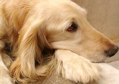 When you bring a new dog into your home, you might be a little overwhelmed. Thus, from APDT here is a checklist of things to consider for the new addition to your home. http://www.apdt.com/petowners/gettingadog/checklist.aspx
