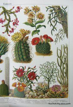 1870s Cactus Botantical Chromolithograph Print by Nachokitty