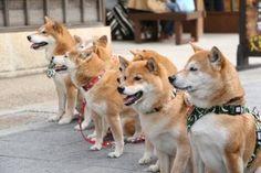 「今日お伊勢さんで柴犬オフしてた」のYahoo!検索(リアルタイム) - Twitter(ツイッター)、Facebookをリアルタイム検索