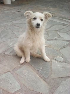 My favourite puppy