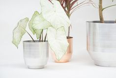 """Self-Watering 8"""" Planter. Our medium sized planter is hand spun from a single piece of aluminum. At 8 inches in diameter, the planter holds a range of standard plant sizes. The planter can be used as a cachepot (holding already potted plants) or as a standard planter with soil placed directly inside. The planter contains a 1"""" reservoir at the base separated from the main body by a piece of perforated aluminum. The reservoir keeps any standing water separate from remaining in contact..."""