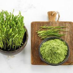 Dieses grüne Superfood ist überall. Doch was kann Weizengras überhaupt und wie schmeckt es? http://www.erdbeerlounge.de/diaet/gesunde-ernaehrung/weizengraspulver-gesundes-superfood/