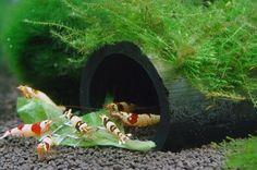 shrimpHut.jpg