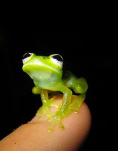 Kermit the Frog spotted in real-life *squeeeee!*
