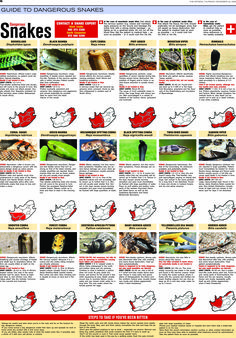 Snake Identification Chart | Dangerous snakes and snakebite