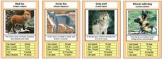 Free Printable Cards, Free Printables, African Wild Dog, Trump Card, Top Trumps, Forest School, Animal Games, Wild Dogs, Life Cycles