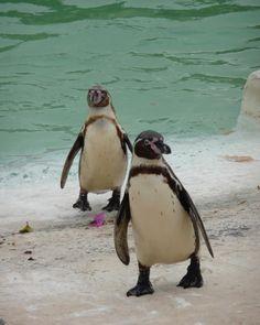 Ja. Genau. Pinguine. Passen immer.