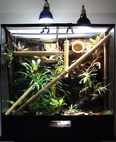 phelsuma bamboo terrarium - Sök på Google