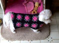 Free Crochet Dog Coat Pattern | Filed under: Dog Coat , dog sweater