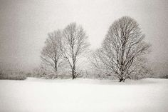 Three Lindens in a Snowstorm, East Hampton, 1996 | From a unique collection of black and white photography at http://www.1stdibs.com/art/photography/black-white-photography/