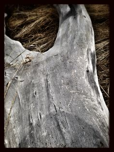 I took a picture of this log at north glenmore park. Lake View, Calgary, Community, Park, Pictures, Photography, Photos, Parks, Photograph