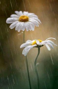 Good morning Vijaya [Video] in 2020 Beautiful Flowers Wallpapers, Beautiful Nature Wallpaper, Beautiful Gif, Wallpaper Flower, Sunflower Wallpaper, Ikebana Flower Arrangement, Ikebana Arrangements, Arreglos Ikebana, Beau Gif