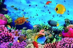 [ Sea Life Wall Murals Underwater Photo Wallpaper Loveabode ] - Best Free Home Design Idea & Inspiration Pintura Coral, Coral Life, Underwater Wallpaper, Fish Wallpaper, Wildlife Wallpaper, Print Wallpaper, Photo Wallpaper, Digital Foto, Underwater World