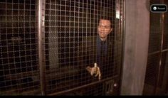Seamus Dever (Detective Ryan) from Castle. Eating a banana. In a jail cell.