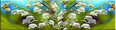 Весенние цветы - Красивые цветы - Красивые картинки анимации