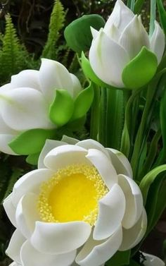 Lucky indoor and outdoor plants and flowers - Flores Flora Flowers, Unusual Flowers, Amazing Flowers, White Flowers, Beautiful Flowers, Feng Shui Plants, Outdoor Plants, Trees To Plant, Beautiful Gardens