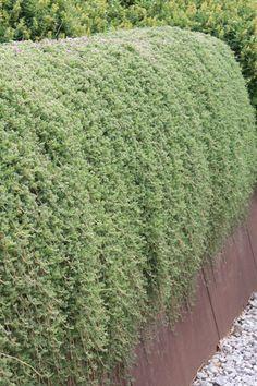 plantas suculentas colgantes   Diseño de interiores