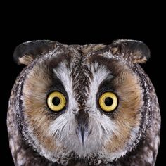 stunning series by Brad Wilson, the photographer captures up-close portraits of different owl species.