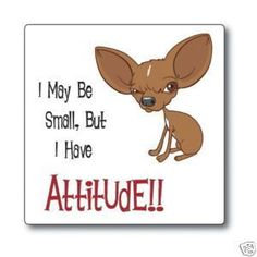 Chihuahua Attitude Dog Sticker Decal Very Cute Chihuahua Puppies, Cute Puppies, Cute Dogs, Chihuahuas, Funny Chihuahua Quotes, I Love Dogs, Puppy Love, Funny Animals, Cute Animals