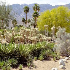 Smoke Tree Ranch fun fact: Walt Disney bought a house here in had to sell it to raise money to build Disneyland. California Palm Trees, California Travel, Smoke Tree, Palm Springs Hotels, Parker Palm Springs, Travel Tours, Travel Ideas, Seven Wonders, Garden Care