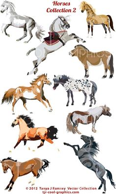 Horse Collection 2 Vector Clip Art by CleverVectors on Etsy, $3.95