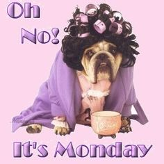 Oh No It's Monday quotes quote monday days of the week monday quotes happy monday monday humor monday quote monday pictures Thursday Quotes, Monday Humor, Monday Quotes, I Love Mondays, Happy Monday, Good Morning Good Night, Good Morning Quotes, I Sleep All Day, Monday Again