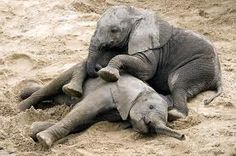 """I imagine she's telling her baby """"just hold still and let me clean that spot"""" What do you think she's telling him?"""