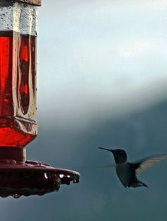 Humming bird coming in for lunch