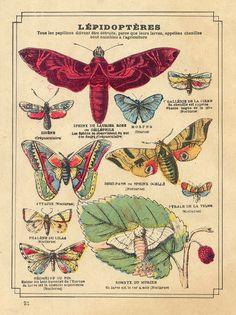 Polillas, bichos,mariposas,insectos