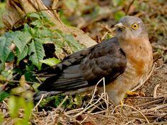 Chintamoni Kar Bird Sanctuary - in West Bengal, India
