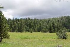 Image result for arizona forest mountains Forest Mountain, Vineyard, Arizona, Mountains, Nature, Image, Travel, Outdoor, Outdoors