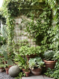 David Rosetzky and Sean Meilak is part of Courtyard garden Australian - A lusciously leafy little garden in Brunswick, Victoria proves that size isn't everything Small Courtyard Gardens, Small Courtyards, Indoor Courtyard, Courtyard Entry, Courtyard Design, Internal Courtyard, Courtyard Ideas, Amazing Gardens, Beautiful Gardens