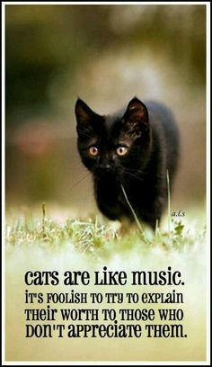 \Cats are like music it's foolish to try to explain their worth to those who don't appreciate them.\