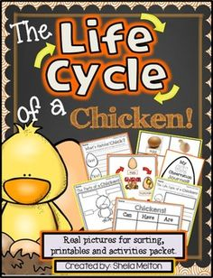 Life Cycle of a Chicken {Real pictures to sort, printables
