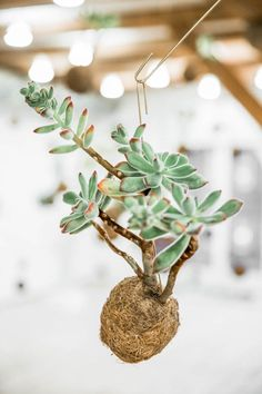 Planteplaneter Copenhagen Single Plant KOKEDAMA   via @scandistandard